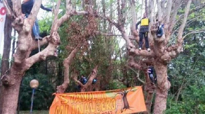 attivisti sugli alberi per fermare lo sgombero del distretto 42